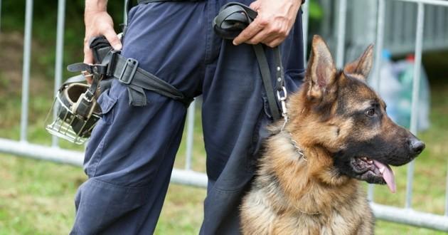 Un policier et son chien