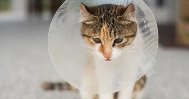 chat ou chien blessé