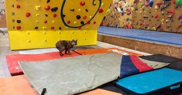 chat qui fait de l'escalade