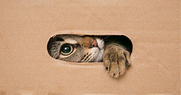 un chat caché dans une boite en carton