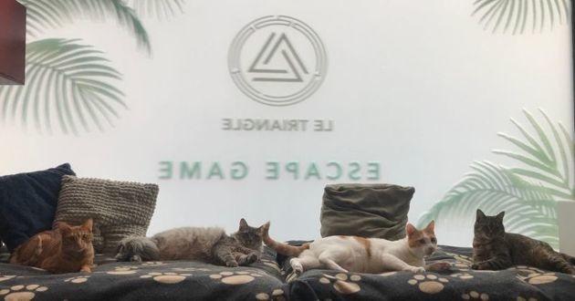 escape game la planète des chats