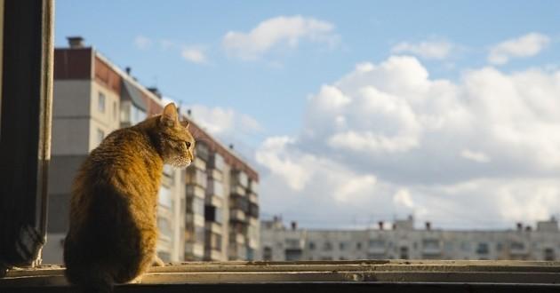 Espagnol doit payer une amende pour ses chats
