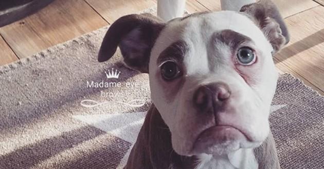chien triste madame eyebrows
