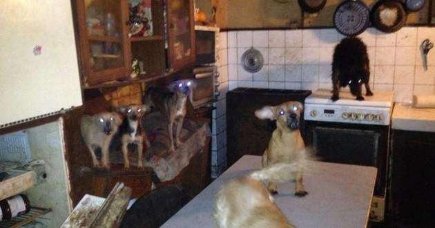 Une trentaine de chiens malnutris et malades saisis chez leur propriétaire — Chelles