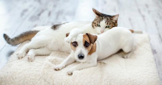 chien et chat allongés dans maison