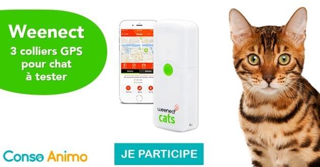 Testez le collier GPS Weenect pour chats !