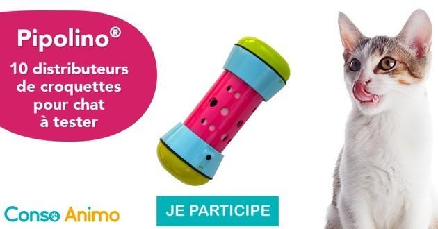 Testez le distributeur de croquettes Pipolino pour chats !