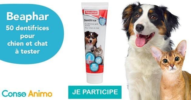 Testez le dentifrice Beaphar pour chiens et chats !