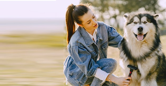 Un chien et sa maîtresse avec une brosse