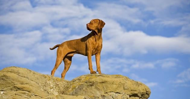 un chien debout sur une falaise