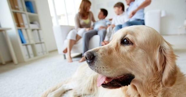 un chien avec une famille