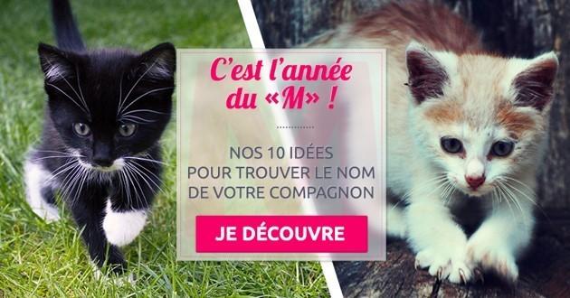 """Nos 10 idées de noms de chat en """"M"""" pour l'année 2016"""