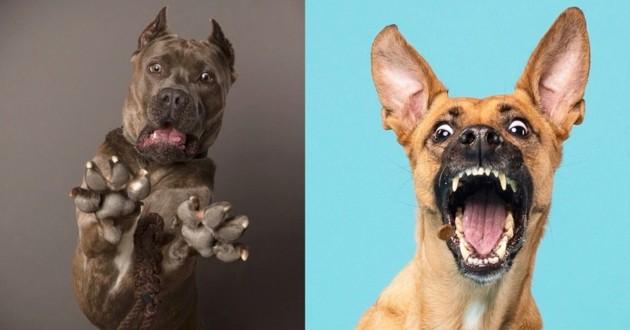 Ce compte Instagram dévoile la personnalité des chiens, les photos sont incroyables !