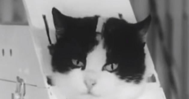 Félicette, chatte dans l'espace