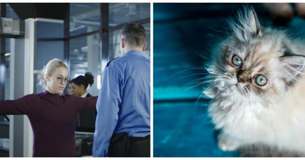 chaton persan et femme aéroport