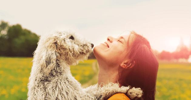 Femme et chien face à face avec un soleil couchant