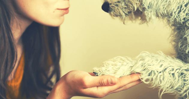 Femme tient la patte d'un chien dans sa main