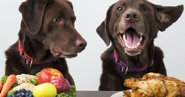 Rendre son chien vegan, une fausse bonne idée ?