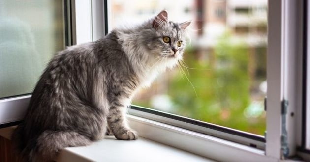 chat près d'une fenêtre