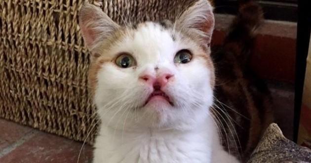 chatte handicapée