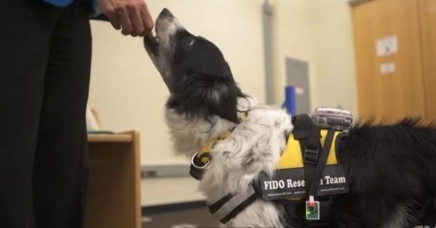 Veste technologique pour faire parler les chiens