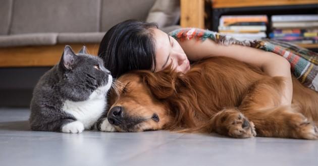 un chien un chat et une fille qui dorment ensemble