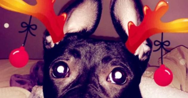Snapchat lance désormais les filtres pour chiens (vidéo)