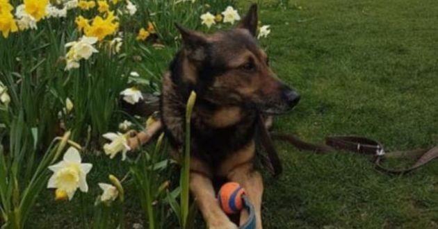 Finn le chien policier