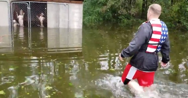 ouragan florence chiens