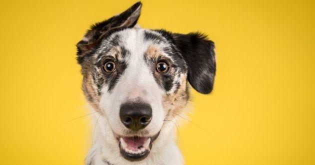 chien heureux sur fond jaune