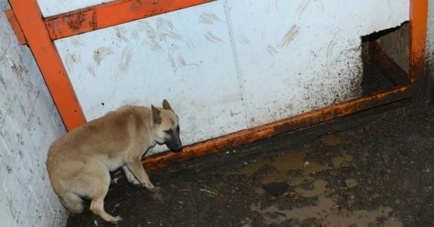 Malinois fondation assistance aux animaux