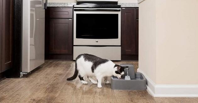 Quelle est la meilleure fontaine à eau pour chat ?