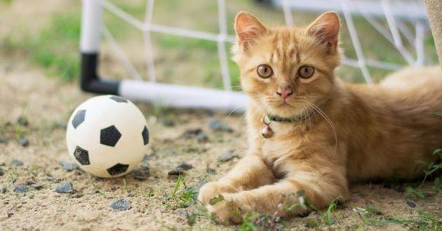 un chat roux avec un petit ballon de foot