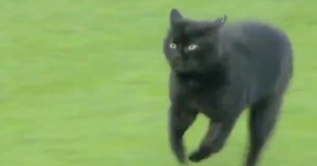 chat noir sur un terrain
