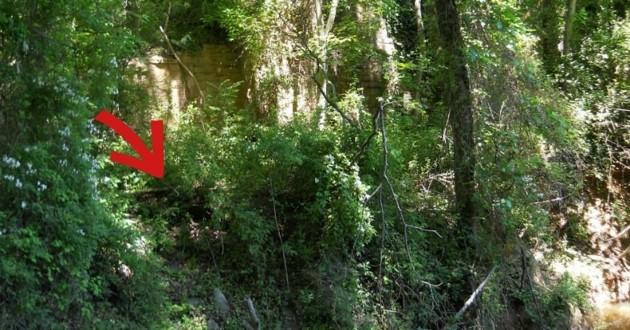 Forêt où les deux bêtes ont été découvertes
