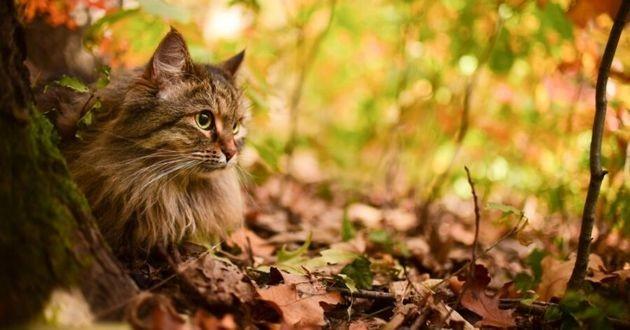 un beau chat dans la forêt