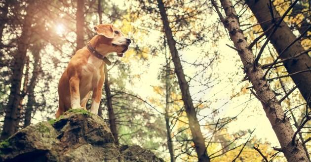 un chien sur un rocher dans la forêt