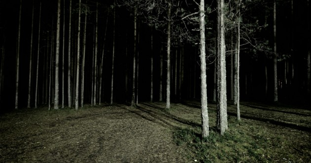 foret nuit