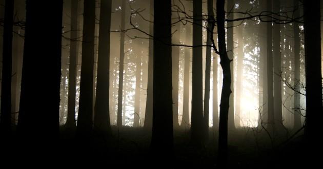 forêt dans la nuit