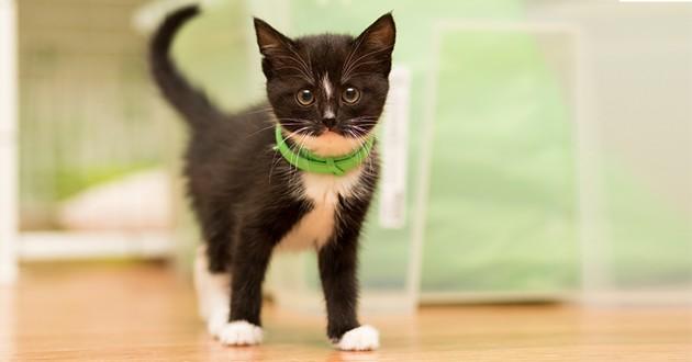 un chaton avec un collier antipuce