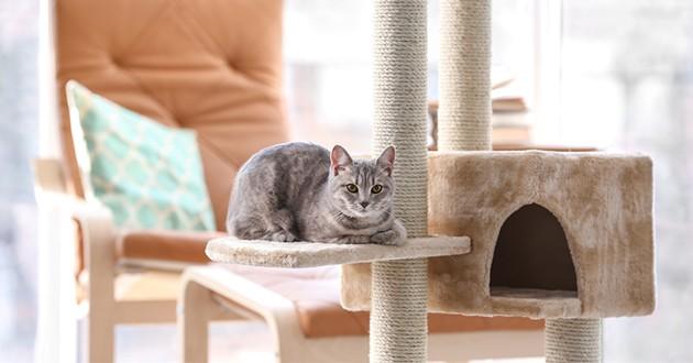 un chat sur un arbre à chat