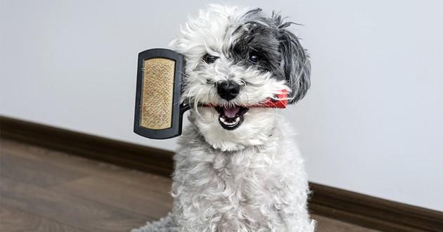 un chien avec une brosse dans la gueule
