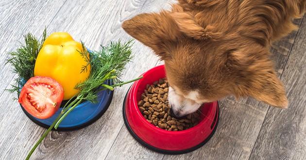 un chien qui mange des croquettes avec un bol de légumes