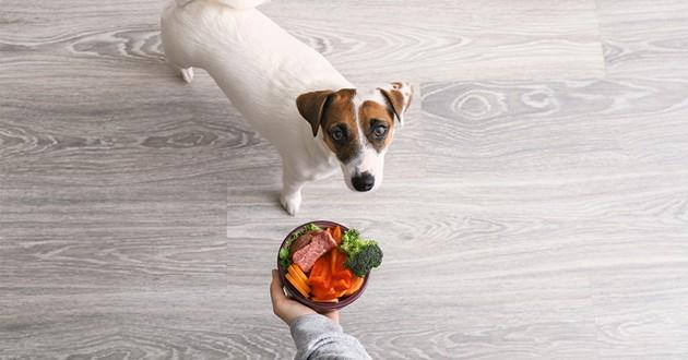 une gamelle de viandes et légumes pour un chien