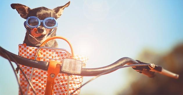 un chien dans un panier sur un vélo