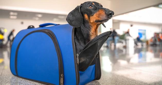 un chien dans un sac de transport