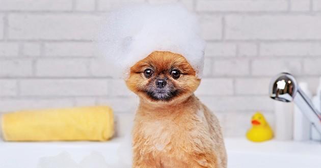 un chien dans la baignoire
