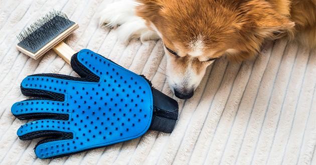 un chien à côté d'une brosse et d'un gant de toilettage