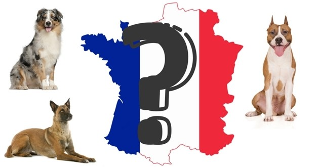 cartographie chiens préférés régions france