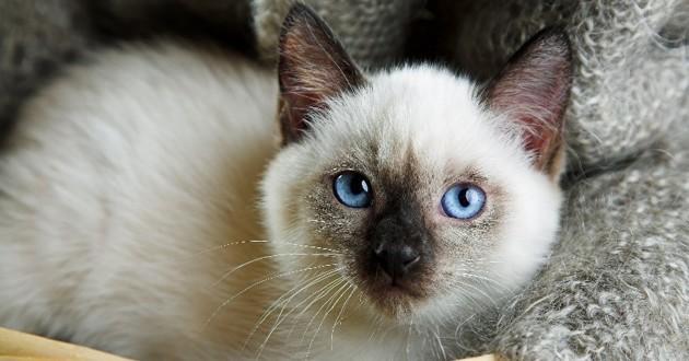 Un chaton tombe du ciel et atterrit sur une cliente dans un caf insolite wamiz - Enlever les puces sur un chaton ...